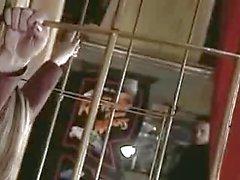 Caldi in gabbia Ballerina provenienti dal Brasile