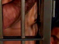 Éducation boxeur Manou Maltés mis en cage