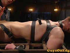 Edding bdsm sub gefesselt für cocksucking