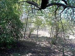 Croisière dans les bois