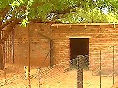 Conjunto De Cuatro en hut africana
