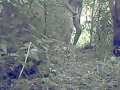 aftrekken en spuiten in de bosjes