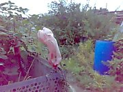Another day at the allotment... part 1