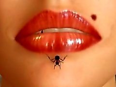 Ants and lips
